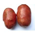 Картофель посадочный, поздний сорт Дезире в сетке 5 кг