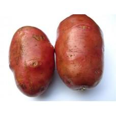 Картофель посадочный поздний сорт Дезире в сетке 5 кг