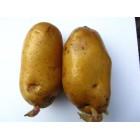 Картофель посадочный, раннеспелый сорт Каррера в сетке 3 кг
