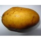 Картофель посадочный, раннеспелый сорт Киммерия в сетке 5 кг