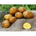 Картофель, среднеспелый сорт Белмонда  в сетке 3 кг