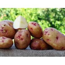 Картофель, среднеспелый сорт Белое Озеро в сетке 3 кг