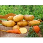 Картофель посадочный, среднеранний сорт Богатка  в сетке 3 кг