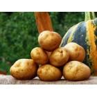 Картофель посадочный, надранний сорт Денар  в сетке 3 кг