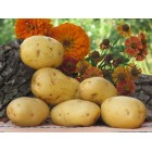 Картофель посадочный, раннеспелый сорт Агаве в сетке 5 кг