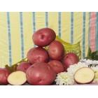 Картофель посадочный, поздний сорт Аладин в сетке 3 кг