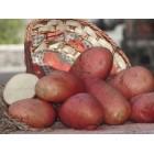 Картофель, среднеспелый сорт Альваре в сетке 3 кг