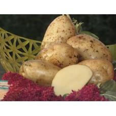 Картофель посадочный среднеспелый сорт Аннушка в сетке 5 кг