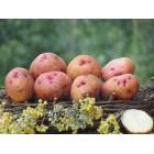 Картофель посадочный, поздний сорт Червона-рута в сетке 3 кг