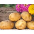 Картофель посадочный, раннеспелый сорт Днепрянка в сетке 3 кг