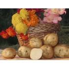 Картофель посадочный, поздний сорт Голубизна в сетке 3 кг