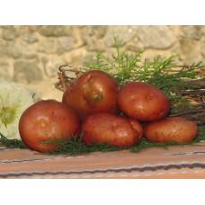 Картофель, среднеспелый сорт Кондор в сетке 3 кг