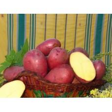 Картофель посадочный поздний сорт Лаура в сетке 3 кг