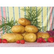 Картофель посадочный раннеспелый сорт Мирабелла в сетке 3 кг
