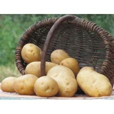 Картофель посадочный раннеспелый сорт Минерва в сетке 5 кг