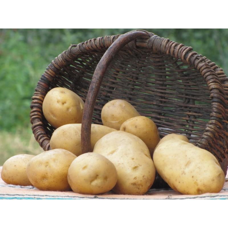 может быть в сетке 28кг картошки