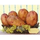 Картофель посадочный, поздний сорт Надийна в сетке 5 кг
