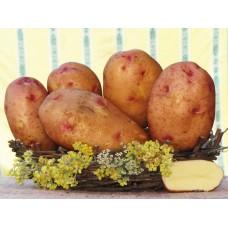 Картофель посадочный поздний сорт Надийна в сетке 5 кг