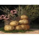 Картофель, среднеспелый сорт Невский в сетке 3 кг