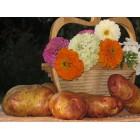Картофель посадочный, поздний сорт Пикасо в сетке 3 кг