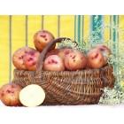 Картофель посадочный, раннеспелый сорт Повинь в сетке 3 кг