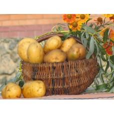 Картофель посадочный среднеспелый сорт Рамос в сетке 5 кг