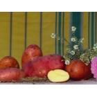 Картофель посадочный, поздний сорт Рено в сетке 3 кг