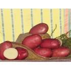 Картофель, среднеспелый сорт Роко в сетке 3 кг