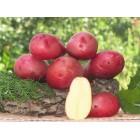 Картофель посадочный, поздний сорт Руманце в сетке 3 кг