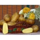 Картофель посадочный, раннеспелый сорт Витара в сетке 3 кг