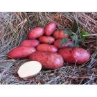 Картофель, раннеспелый сорт Либелия в сетке 3 кг