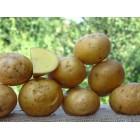 Картофель посадочный, ранний сорт Лилу(и)  в сетке 3 кг