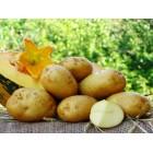 Картофель посадочный, ранний сорт Михалина  в сетке 3 кг