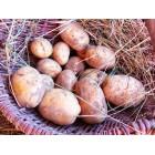 Картофель, раннеспелый сорт Нагорода в сетке 3 кг