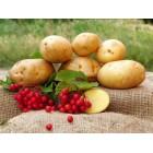 Картофель, средньопоздний сорт Овация  в сетке 3 кг