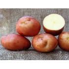 Картофель посадочный, среднеспелый сорт Петроюривский в сетке 5 кг