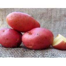 Картофель посадочный, среднеспелый сорт Раминдо в сетке 5 кг
