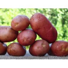 Картофель, среднеспелый сорт РедБерон  в сетке 3 кг