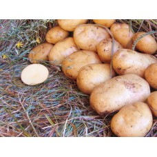 Картофель, надранний сорт Ривьера  в сетке 3 кг