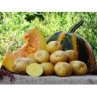 Картофель посадочный, надранний сорт Вивиана  в сетке 3 кг