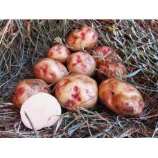 Картофель, надранний сорт Закарпаття  в сетке 3 кг