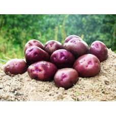 Картофель, среднеранние сорта — 70—75 дней Блек Барон, в сетке 3 кг