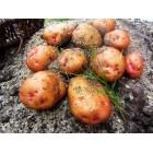 Картофель посадочный, раннеспелые сорта 65—70 дней Иванкивська, в сетке 3 кг