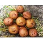 Картофель Свитанок киевский 3 кг