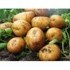 Картофель, среднепоздние сорта — 115—120 дней Мелоди, в сетке 3 кг