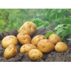 Картофель посадочный, среднеранние сорта — 70—75 дней Сувенир Чернигова, в сетке 3 кг