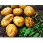 Картофель посадочный, раннеспелые сорта 65—70 дней Вивана, в сетке 3 кг