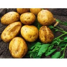 Картофель посадочный, раннеспелые сорта 65—70 дней Вивана