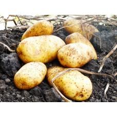 Картофель, раннеспелые сорта 65—70 дней, Бюрен в сетке 3 кг