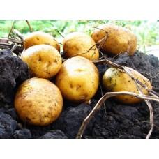 Картофель, среднеранние сорта — 70—75 дней, Кристел в сетке 3 кг